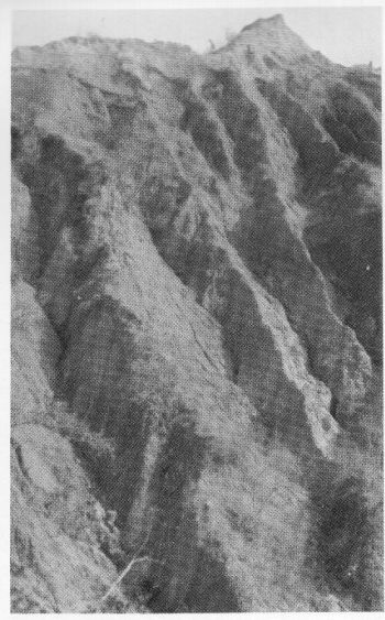 Severe 'gully' erosion in soft earthy strata